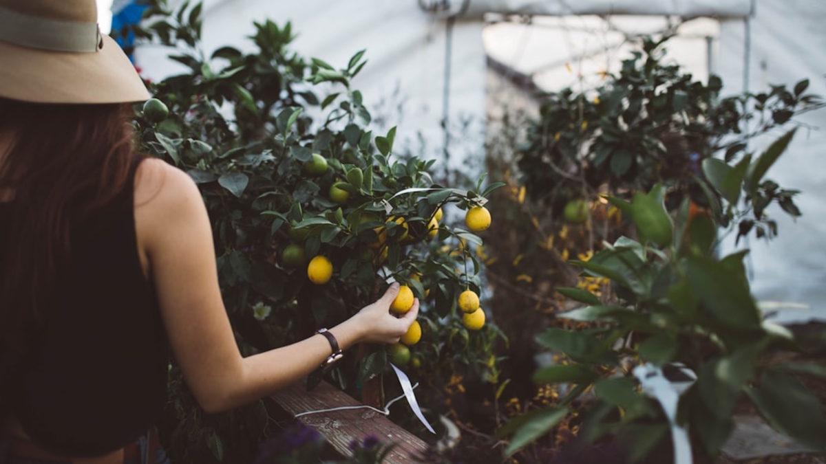 Da villa della mafia a orto botanico grazie al crowdfunding di Università Bicocca