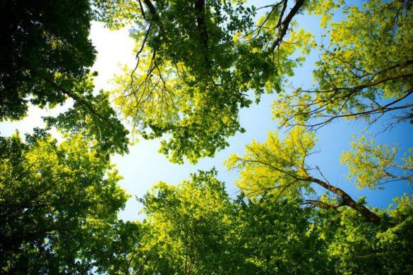 alberi, cambiamento climatico